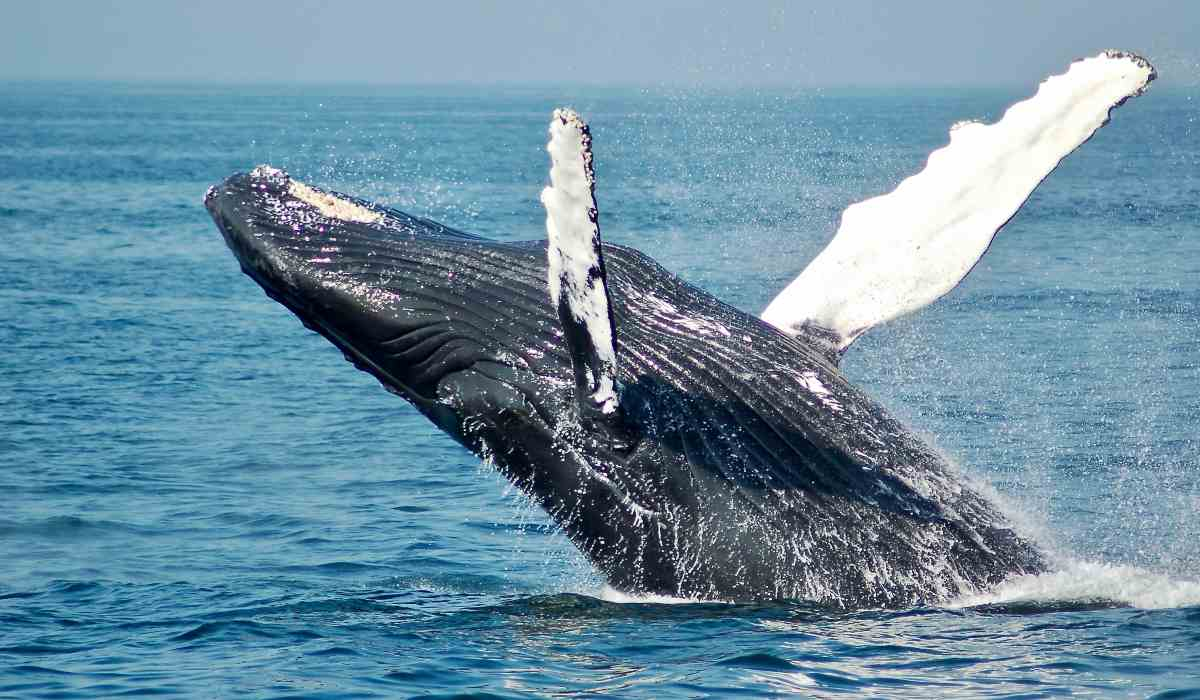 La conservación de las ballenas contra el cambio climático - Fundación Aquae