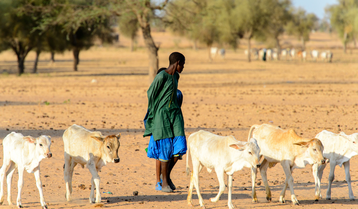 acciones para evitar la desertificación