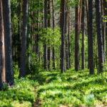 reforestacion en manilva