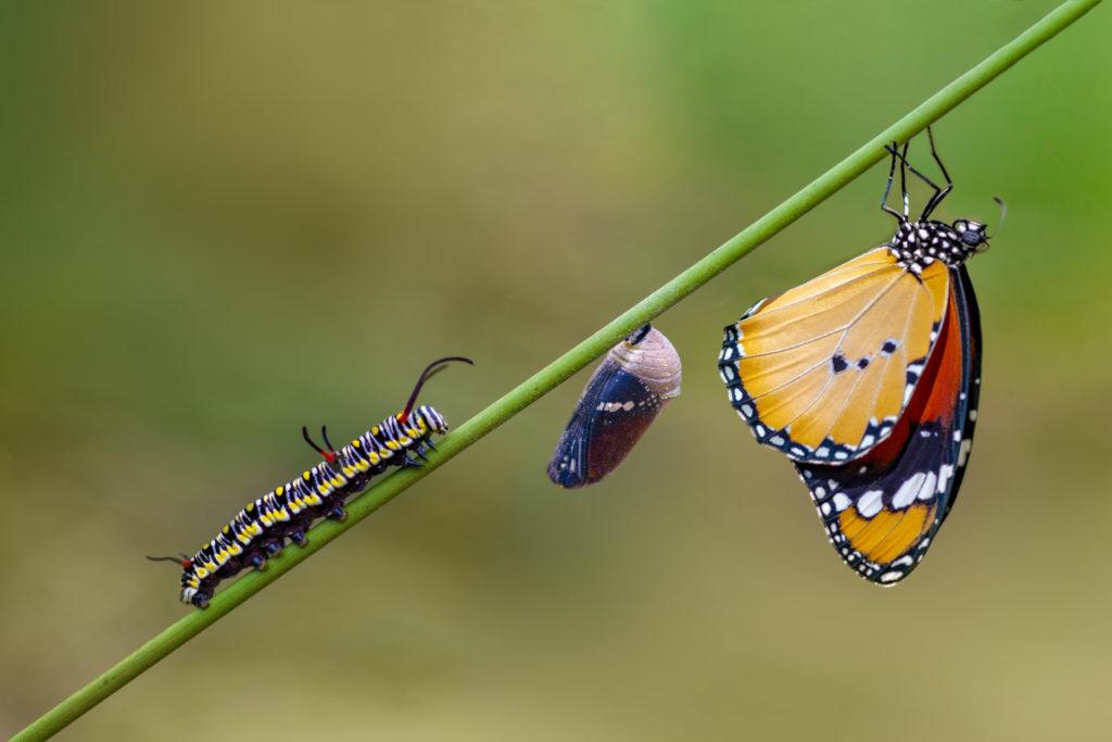que pasaría si los insectos desaparecieran