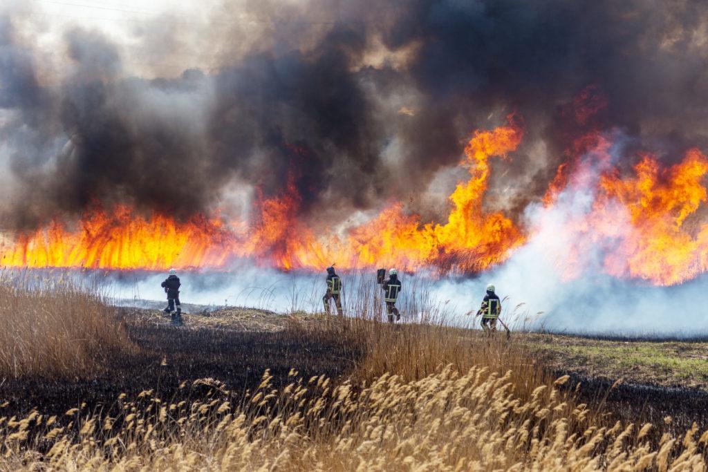 Cada vez más las consecuencias de los incendios forestales son más devastadoras convirtiendolos en megaincendios de difícil control