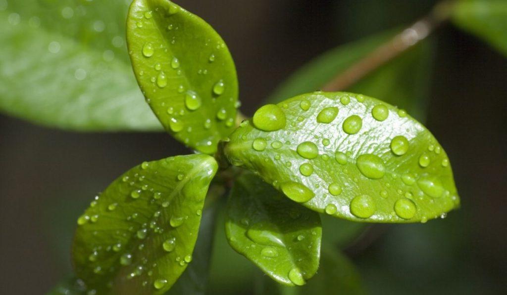 fotosintesis de las plantas