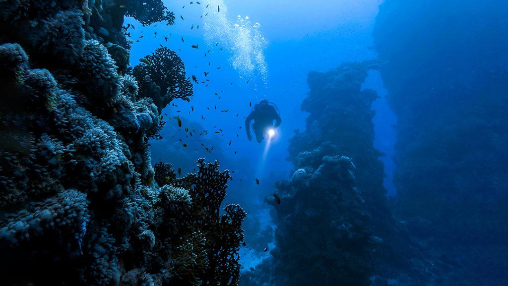 Este grupo de pioneras mujeres han dedicado su forma de vida a investigar y destacar la importancia de los océanos para los ecosistemas