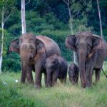 El 4 de octubre se celebra el Día de los Animales que tiene como objetivo la protección de todas las especies