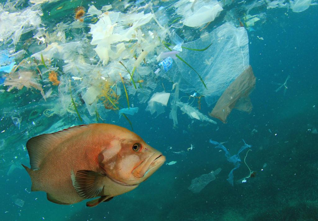 Las islas de plástico en el mar son una consecuencia directa de la contaminación que provoca no solo la muerte de millones de animales, sino también afecta a nuestra salud por el consumo de microplásticos en los peces que consumimos
