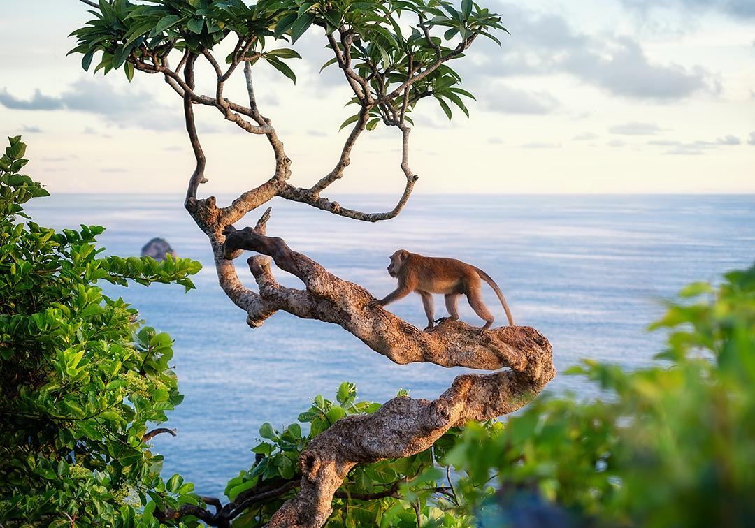 La pérdida de la biodiversidad es un problema medioambiental pero ¿eres consciente de sus graves consecuencias?