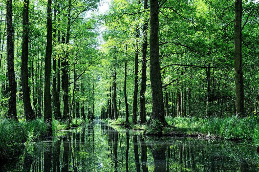 Los bosques actúan como escudos para protegernos de enfermedades y virus que pueden afectar a la salud humana por eso es tan importancia su conservación y protección