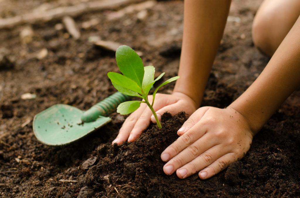 La FAO declara el año 2020 como el Año Internacional de la Sanidad Vegetal con el objetivo de tomar conciencia sobre la importancia del cuidado y protección de las plantas para la salud