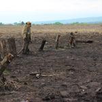La deforestación es una de las causas que provoca que miles de especies pierdan sus hábitats y tengan que desplazarse hacia asentamientos humanos en busca de alimento. Esto provoca que se incremente el riesgo de transmisión de enfermedades zoonóticas entre animales y humanos - La zoonosis, que provoca enfermedades zoonóticas, está relacionada con el medio ambiente