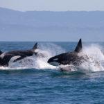 En el día mundial de la protección de la naturaleza se pretende concienciar y reivindicar el cuidado del medio ambiente