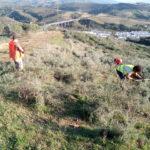 Plantación en Manilva