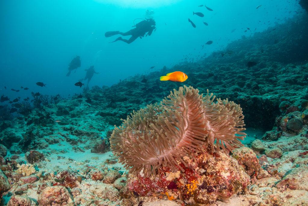 Las principales amenazas del mar como la contaminación por plásticos afectan a la salud de los océanos
