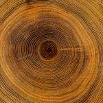Dendrocronología ciencia que estudia el pasado de los árboles a través de los anillos de su tronco