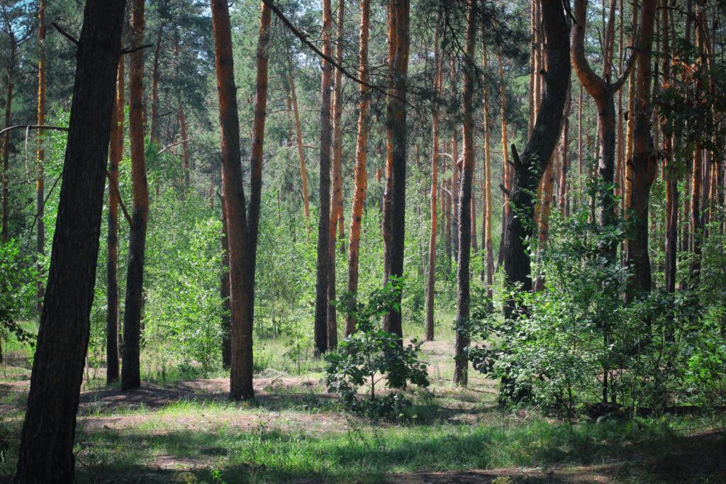 Aina S. Erice, bióloga y divulgadora, nos destaca la importante información que recogen los troncos de los árboles referente al cambio climático