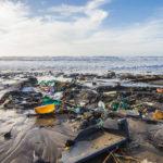 Los efectos del calentamiento global y la contaminación de mares y océanos repercuten seriamente en la salud de estos ecosistemas y las especies que habitan en ellos