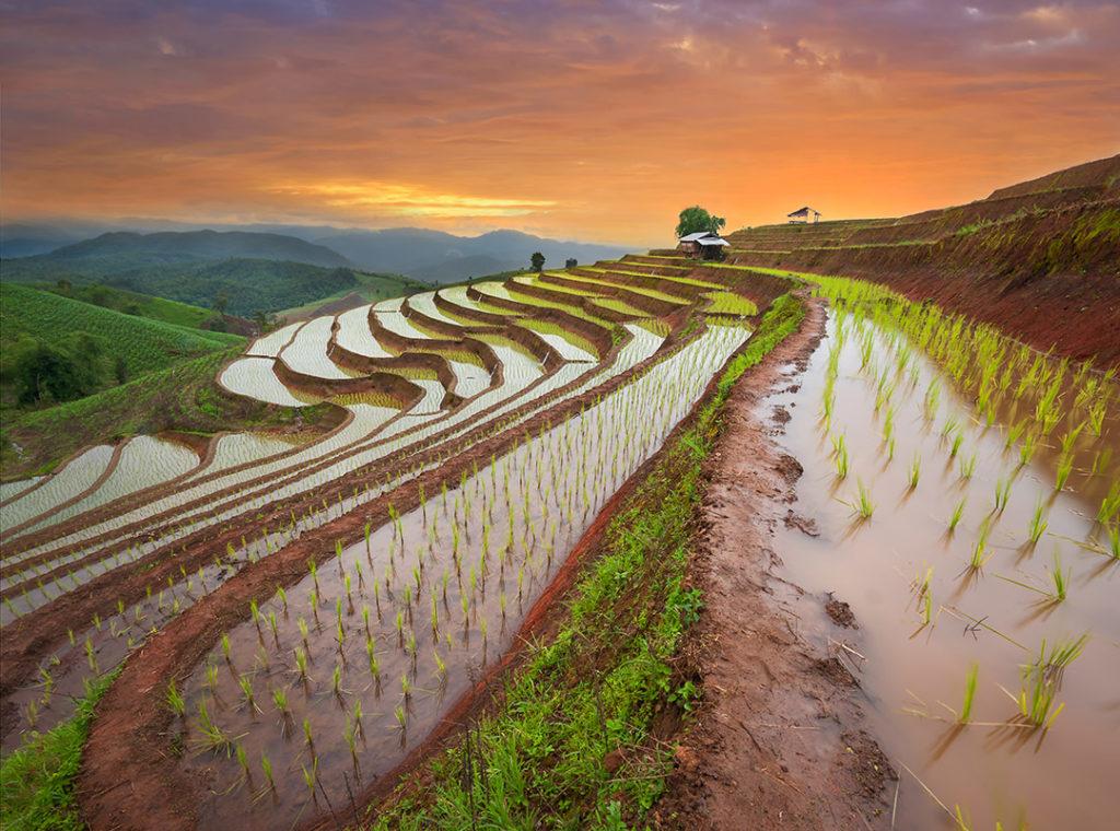 La agricultura salina es una alternativa sostenible para el mejor aprovechamiento del suelo