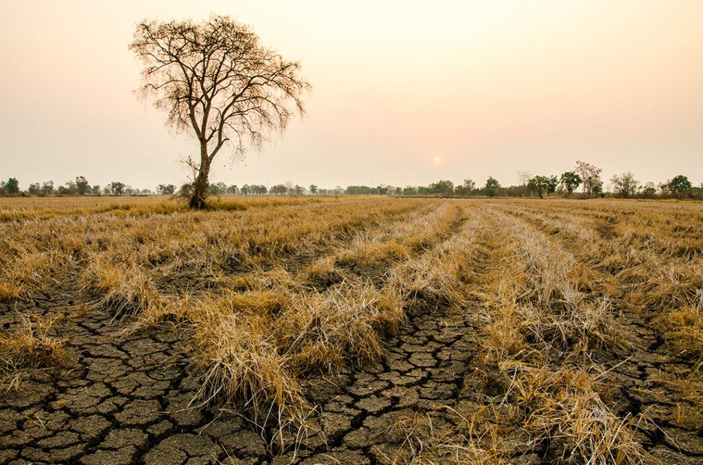 La sequía es uno de los fenómenos climatológicos más recurrentes de la zona del Corredor Seco