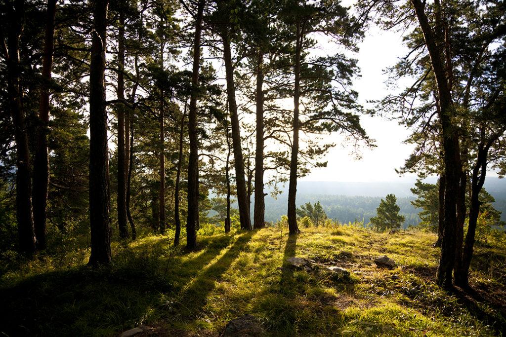 La restauración forestal forma parte de los Objetivos de Desarrollo Sostenible