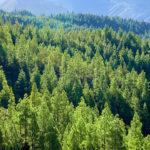 Día Mundial del Medio Ambiente 2021 reivindica la restauración de los ecosistemas