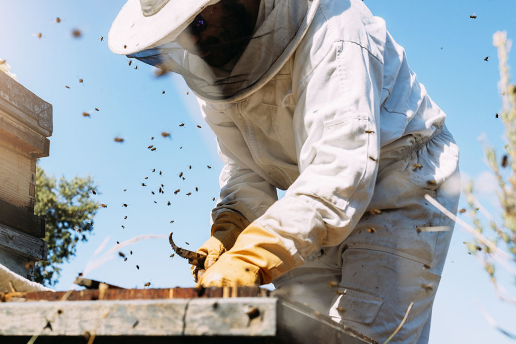 Las abejas clave para el desarrollo sostenible