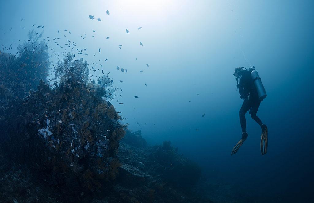 El Decenio de las Ciencias Oceánicas busca impulsar la investigación para cuidar y proteger los ecosistemas marinos