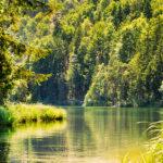 Cuidar los ecosistemas es proteger la salud del planeta