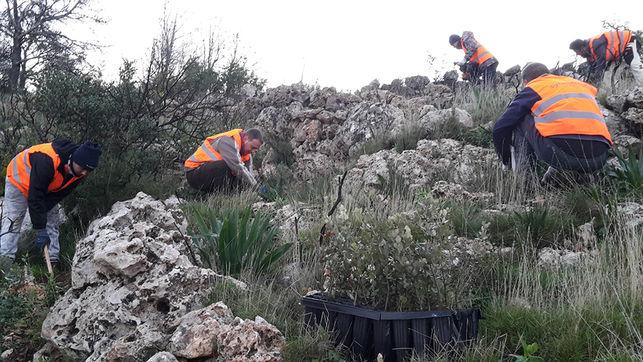 Reforestación en Alicante