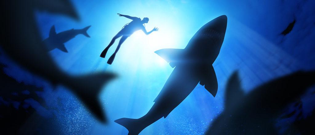 Eugenie Clark, la reina de los tiburones