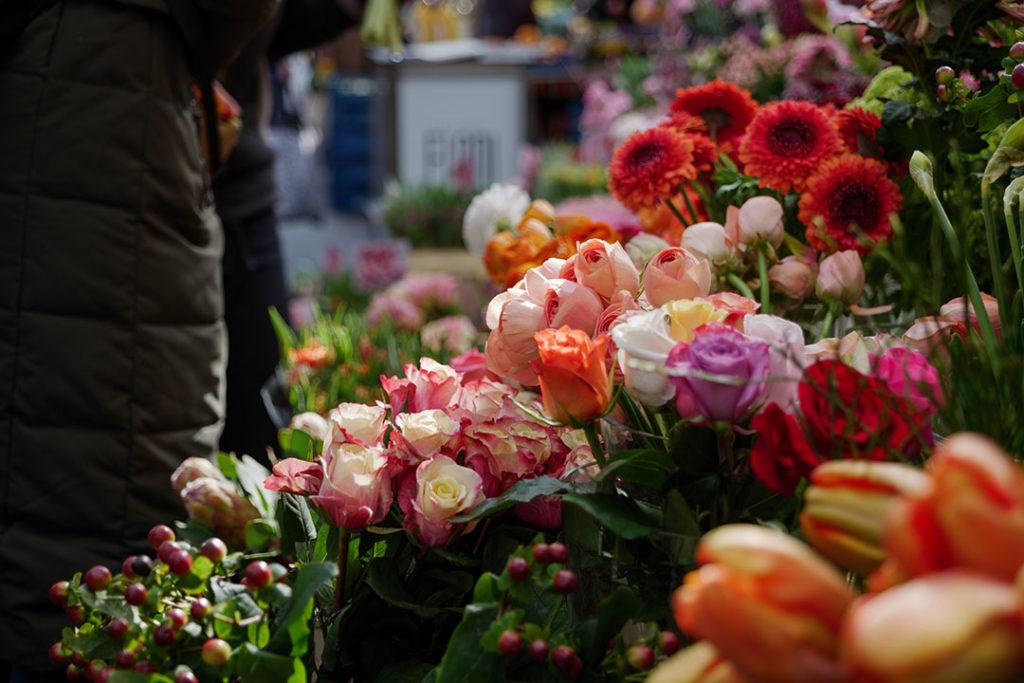 La belleza es la principal característica de la rosa. Su fruto es una fuente de vitamina C y es una planta muy presente en Sembrando Oxígeno.