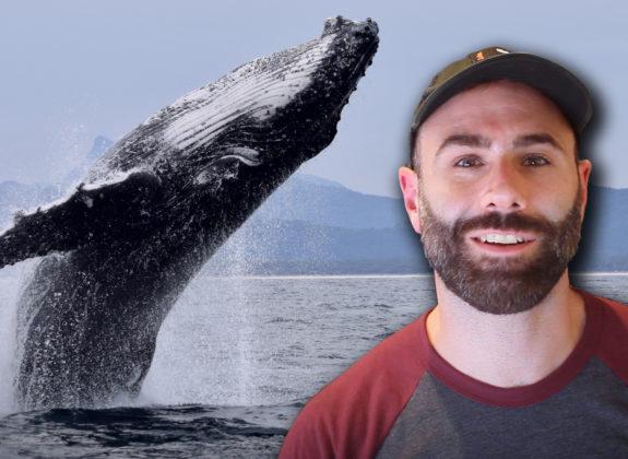 El origen de las ballenas